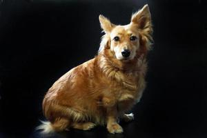 cane italiano