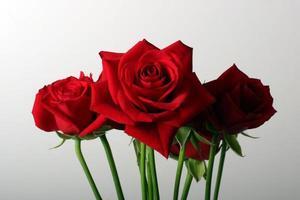 Bundle of roses photo