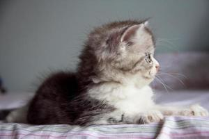 Sweet little baby kitty close up photo