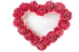 Carnation In Love Shape photo