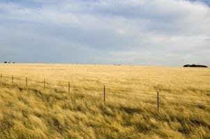 colores de la granja foto