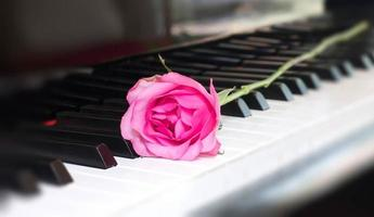 Pink rose on a piano key