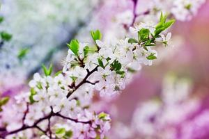 blooming fruit tree branch, colored filters