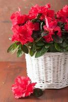 beautiful red azalea flowers in basket over rustic background photo