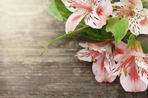 flores de color rosa sobre fondo de madera