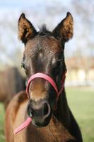 caballo bebé en pasto