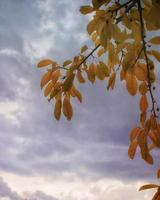 Autumn tree and cloudy sky