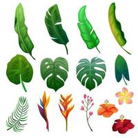 Tropical summer foliage nature clipart object set