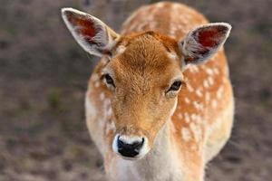 Close up of deer