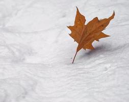 Rusted leaf on snow