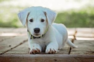 cachorro sentado en tablones de madera