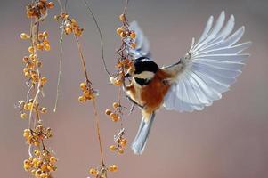Little bird fluttering