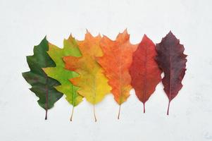 Isolated autumn gradient leaves