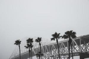 Palm trees near a bridge
