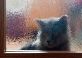 Cat behind door photo