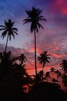 Palm trees in the sunset on the Caribbean