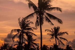 palm trees at beautiful sunset time photo