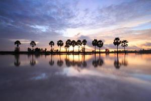 Colorful sunrise landscape with silhouettes of palm trees