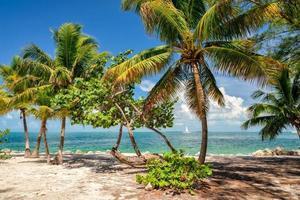 palmbomen op een strand, de zee.
