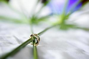 wedding rings with bueatiful flower in the background