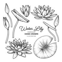 Water lily flower drawings vector
