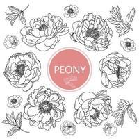 conjunto de flores de peonía vector