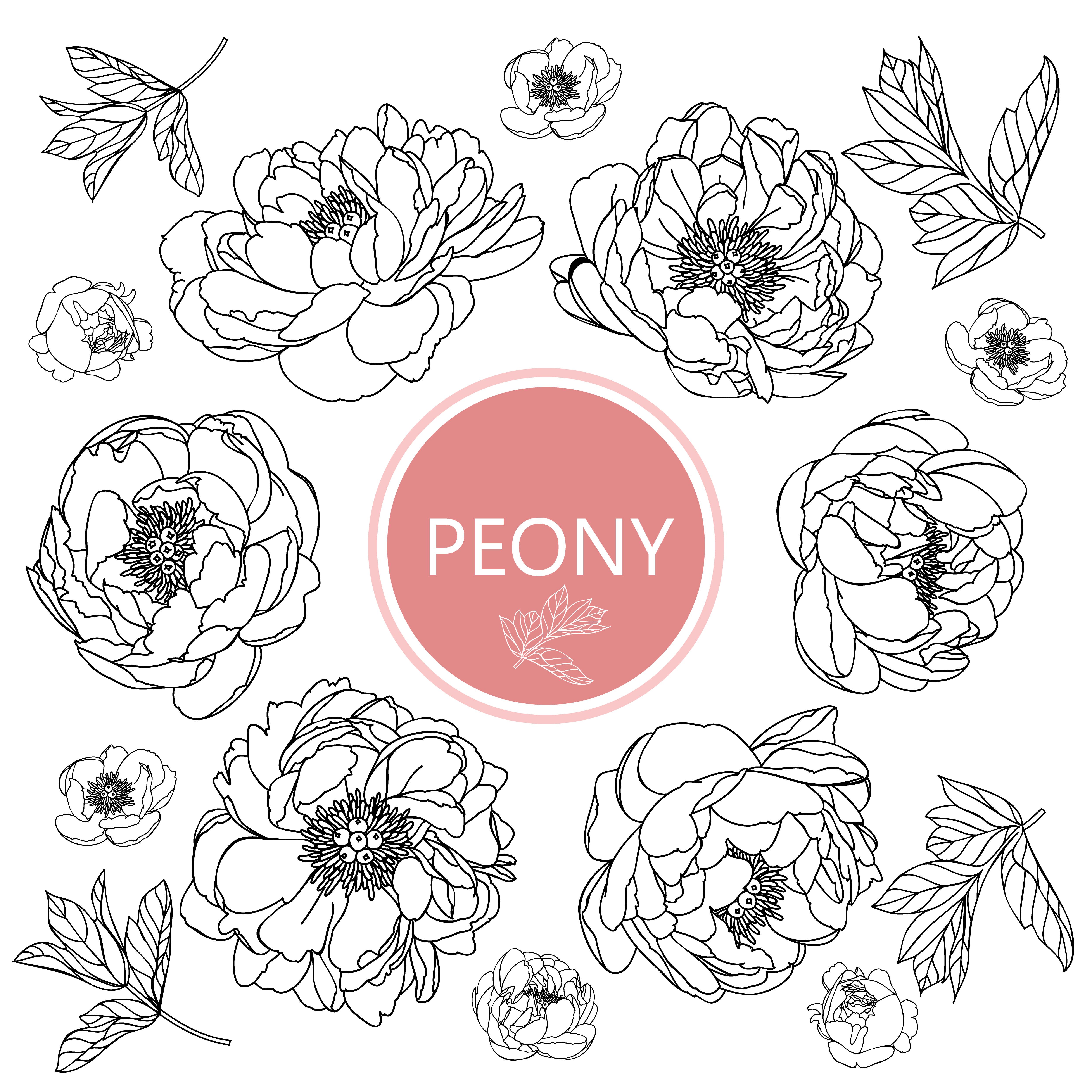 Peony flowers set