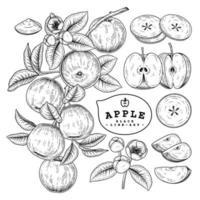 conjunto retro de manzana dibujado a mano vector