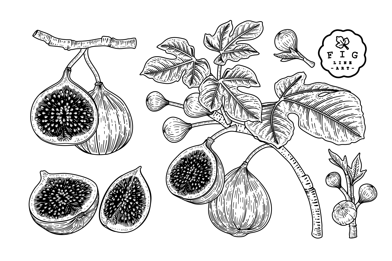 Fig Sketch retro set