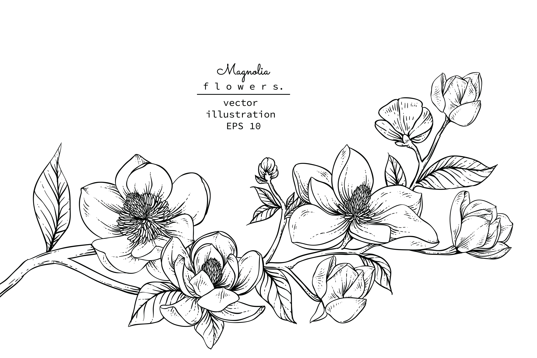 rama de flor de magnolia vector