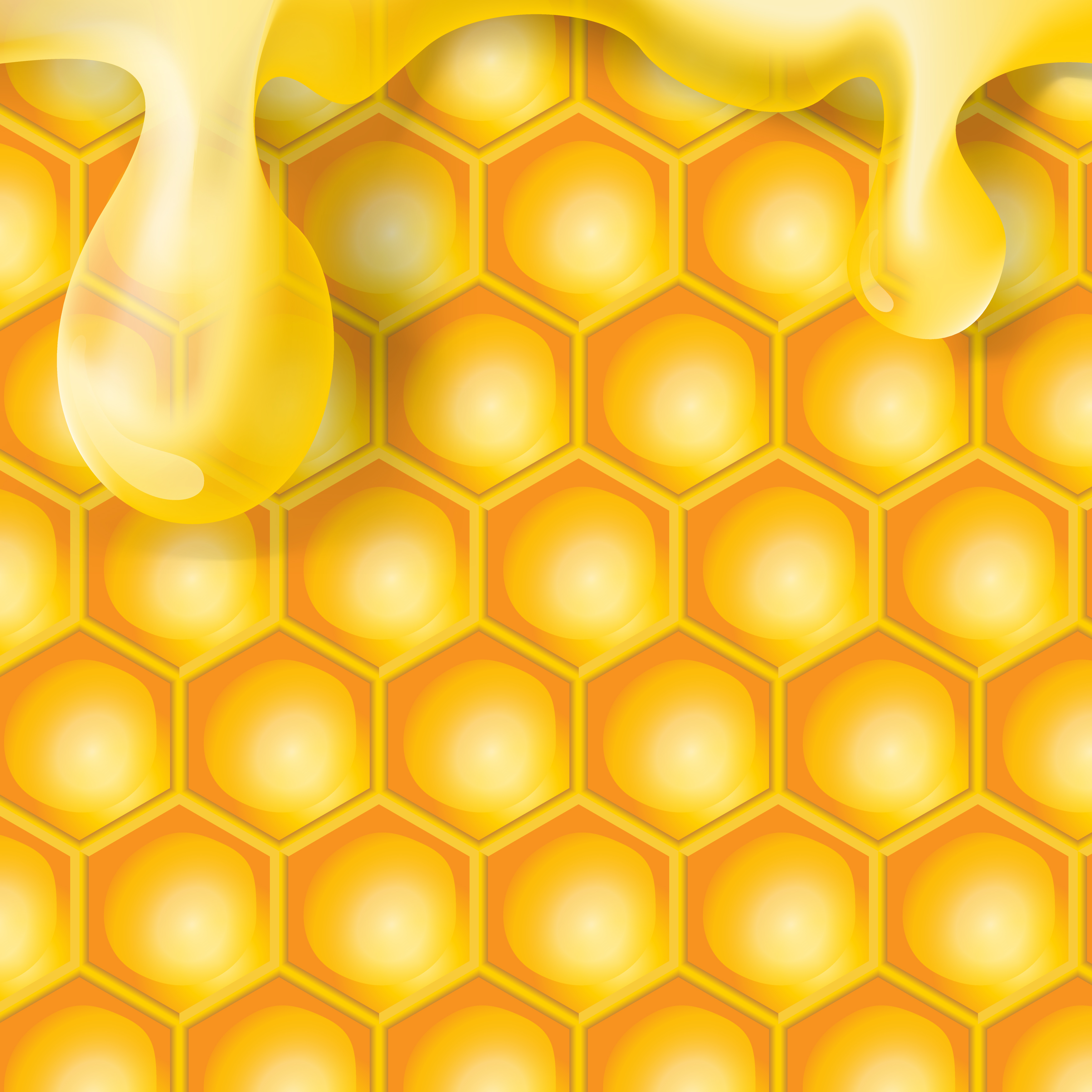 Realistic transparent honey drop on honeycomb vector