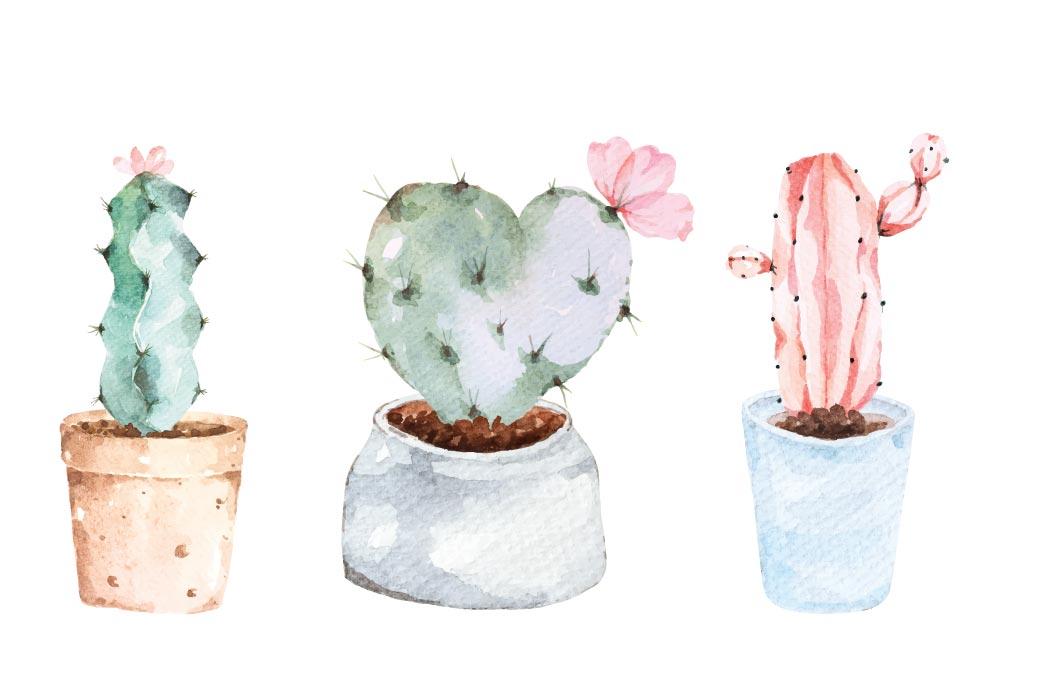 cacto em vasos pintados com aquarela