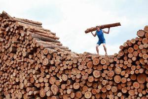 man on top of large pile of logs, lifting  log photo