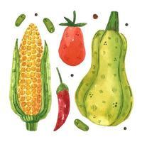 maíz, tomate, guindilla, guisante, calabaza vector