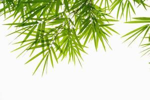 hojas de bambú aisladas