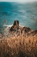 Brown wheat grass on cliff photo