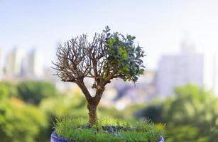 primer plano, de, un, bonsai, árbol