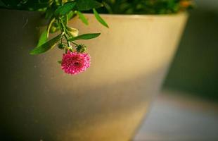 fotografia de foco raso de flor rosa