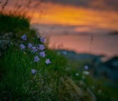 Fotografía de enfoque selectivo de flores de pétalos de color púrpura