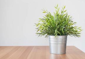 Green plant in galvanized metal bucket photo