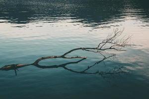 Bare tree limb on body of water