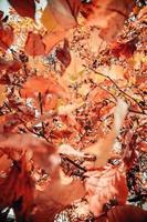 Close up photo of orange leaves