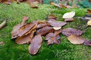 Dried leaves on moss