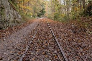 Railroad tracks coved with fallen leaves