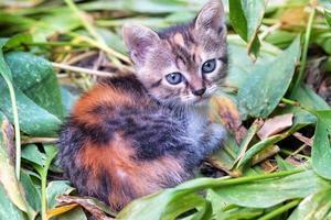 gattino seduto su foglie di piante