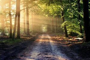 estrada não pavimentada entre árvores