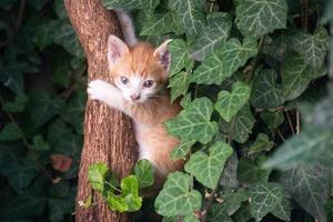Kitten climbing on tree trunk