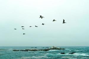 Pelicans over the ocean