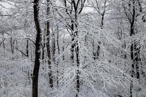 Snow and ice-covered trees