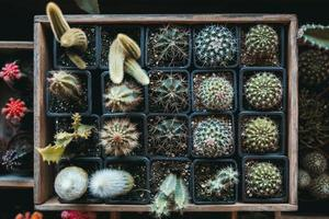 una caja llena de cactus verdes